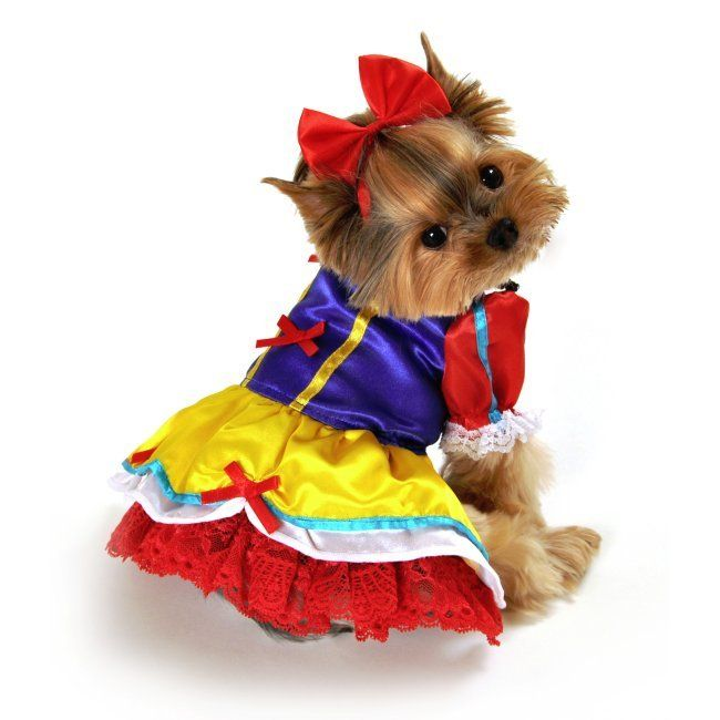 Princess Dog Costume  sc 1 st  BuzzSharer.com & 17 Costumes That Prove Shih Tzus Always Win At Halloween