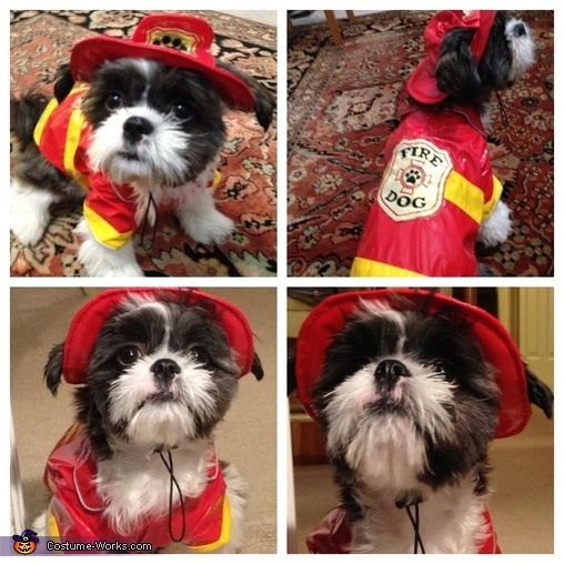 Puppy Fire Rescue shih tzu