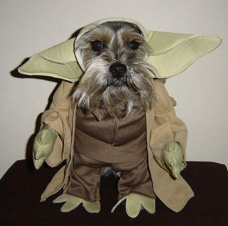 Schnauzer funny costume