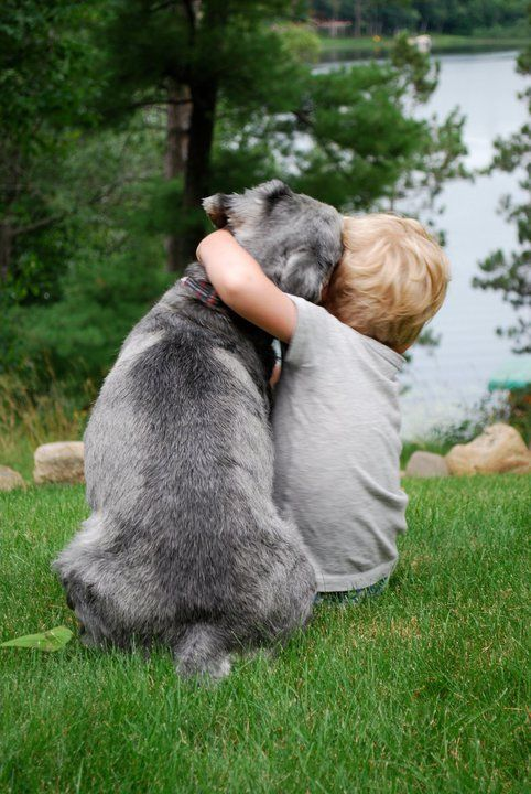 Schnauzer hugging child