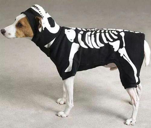 Skelejack russell halloween