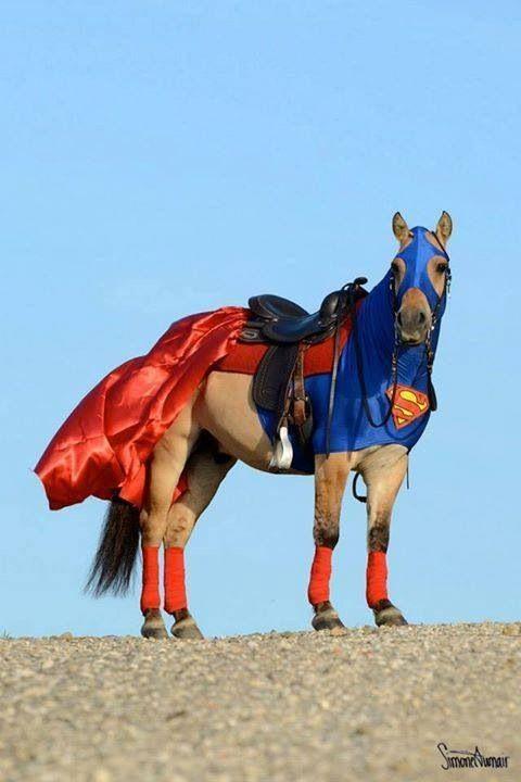 Superhorse