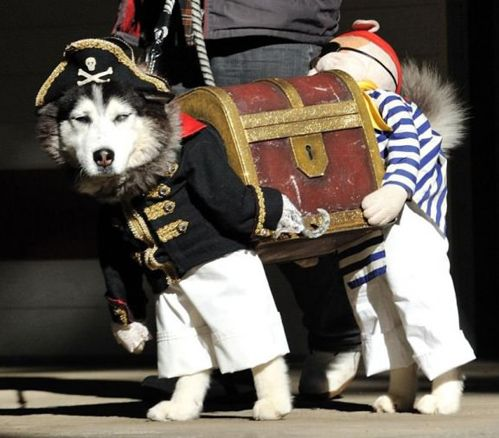 Treasure Chest Dog