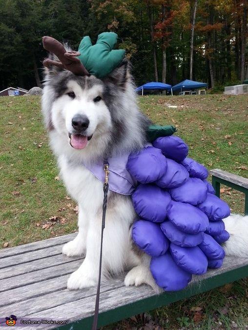 amazing costume husky
