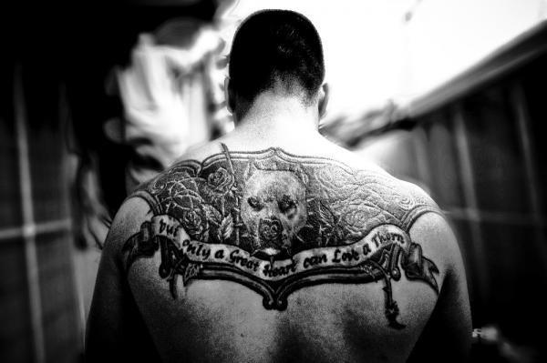 back tattoo pit bull