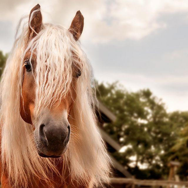 beautiful horse photo face