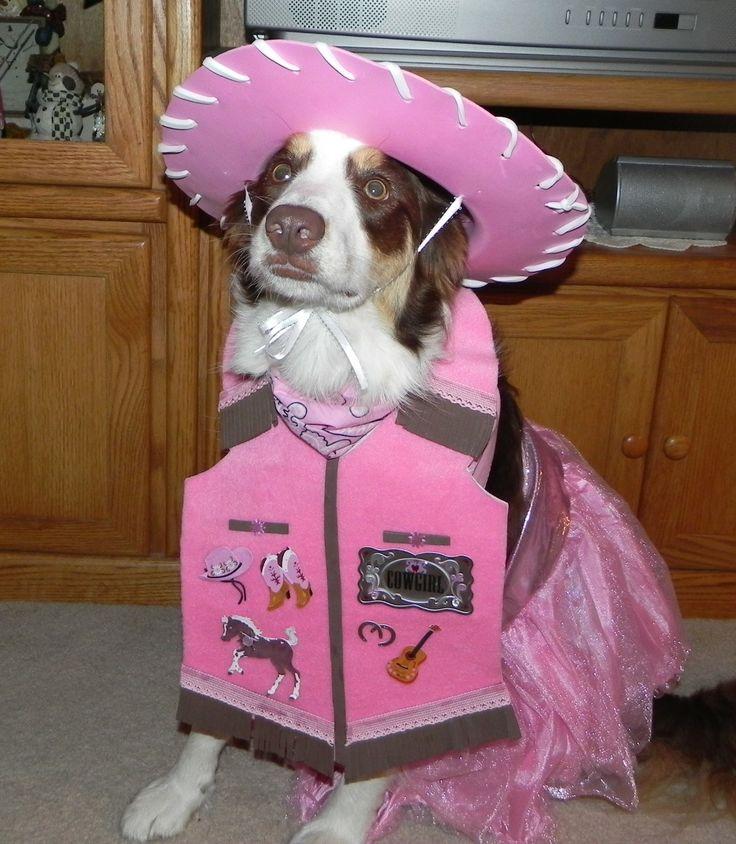 border collie halloween cowgirl