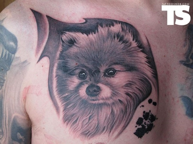 chest tattoo pomeranian design