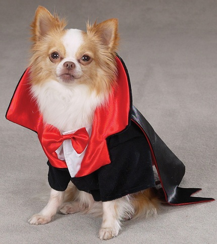 chihuahua halloween clothes