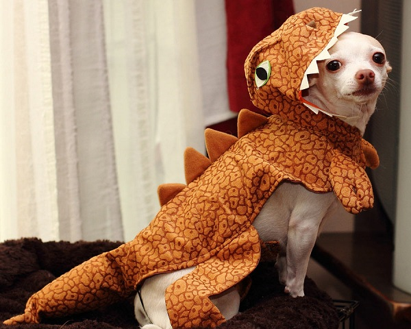 chihuahua halloween dog clothing