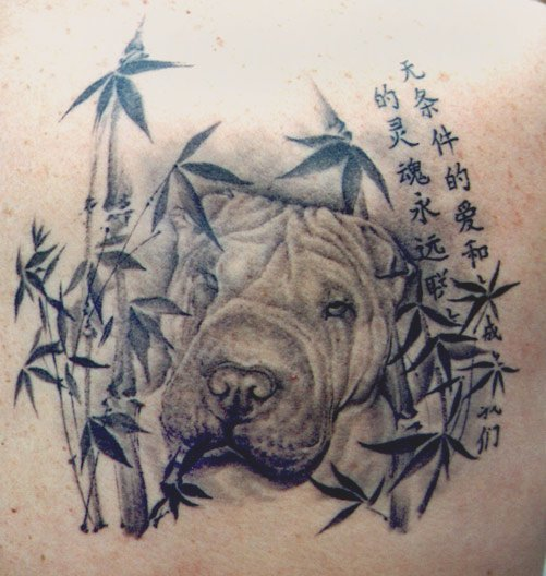 cool tattoo shar pei photo