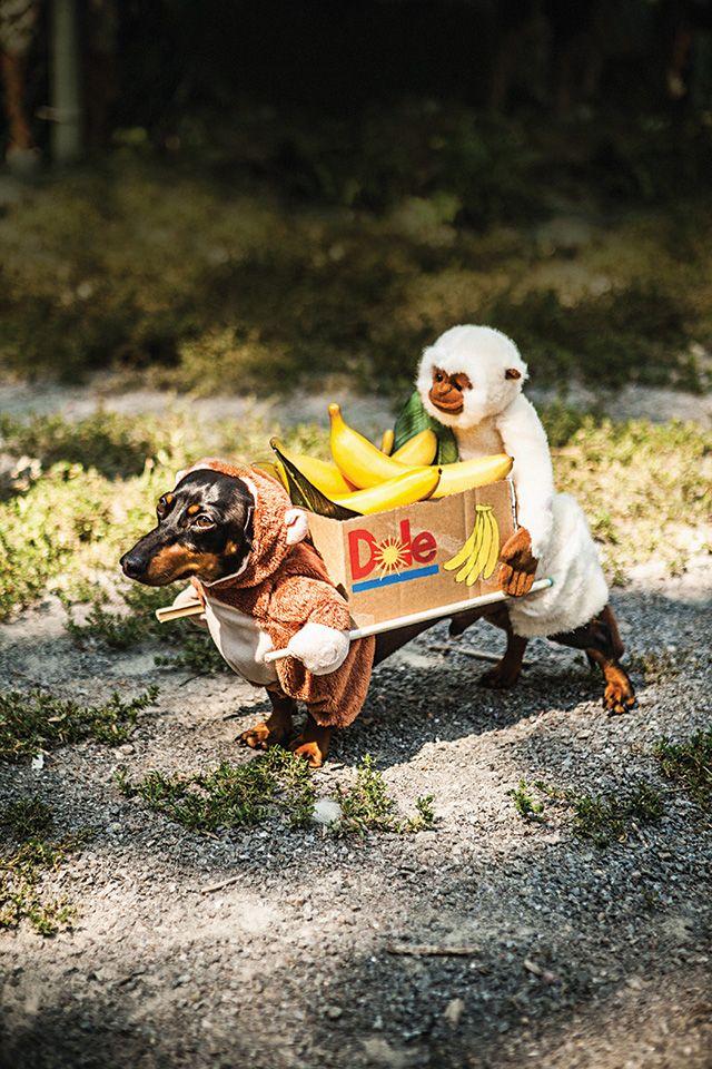 dachshund costume