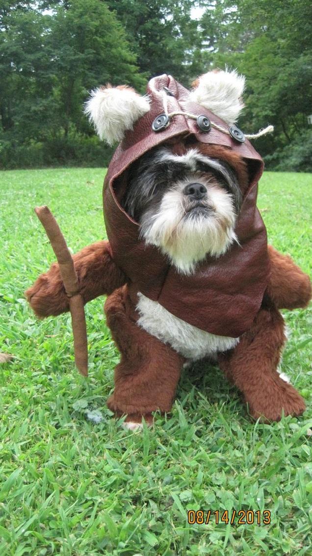 ewok dog outfit halloween