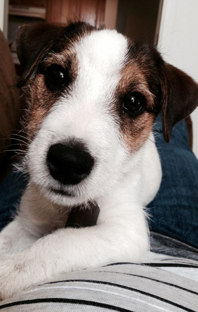 Cats Eyes Road >> 12 Reasons Why You Should Never Own Jack Russells