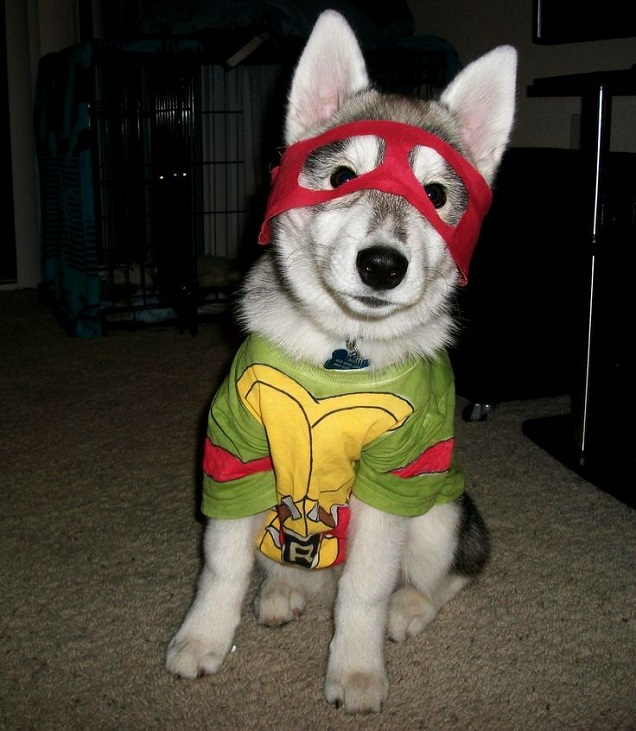 halloween husky costume