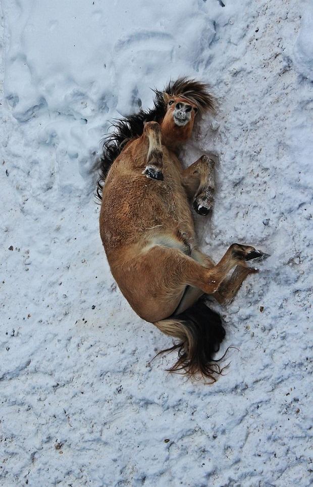 horse snow photo love