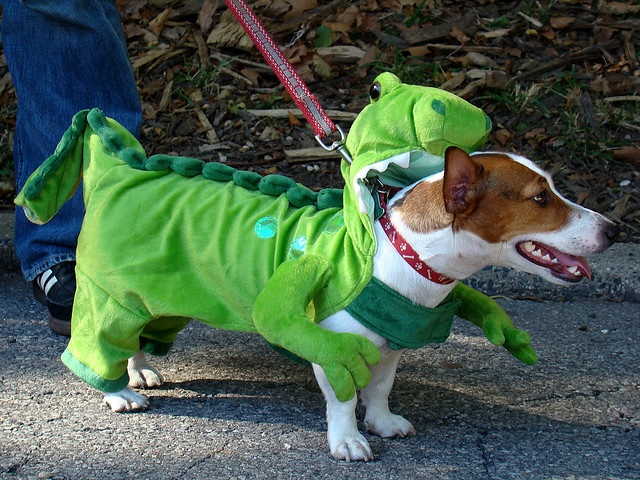 jack russell outfit halloween
