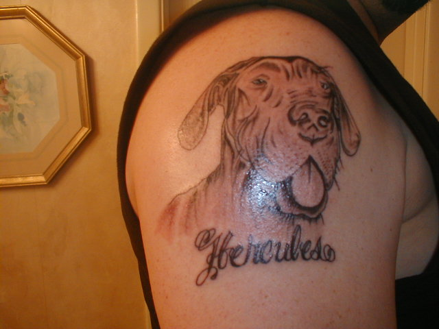 pics photo great danes tattoos arm