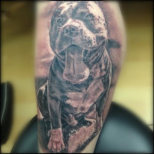 pics pit bull tattoos
