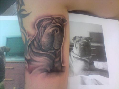 pics tattoo art shar pei