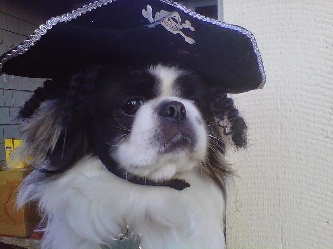 pirate pekinges