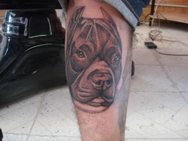 pit bull dog tattoo leg