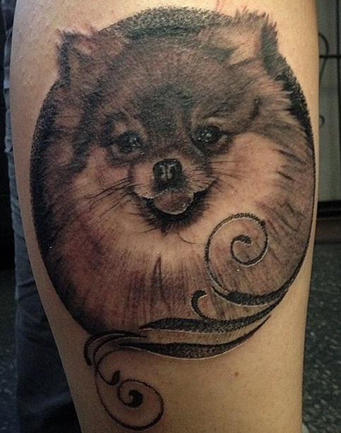 pomeranian tattoo design ideas
