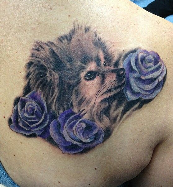 pomeranian tattoo design