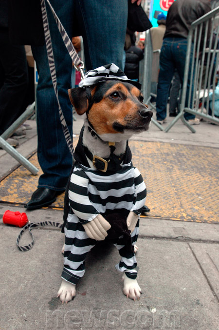 prisoner costume for jack russell