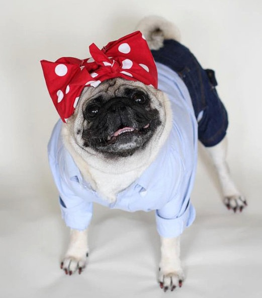 pug halloween costume riveter