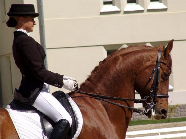 riding horse back girl amazing