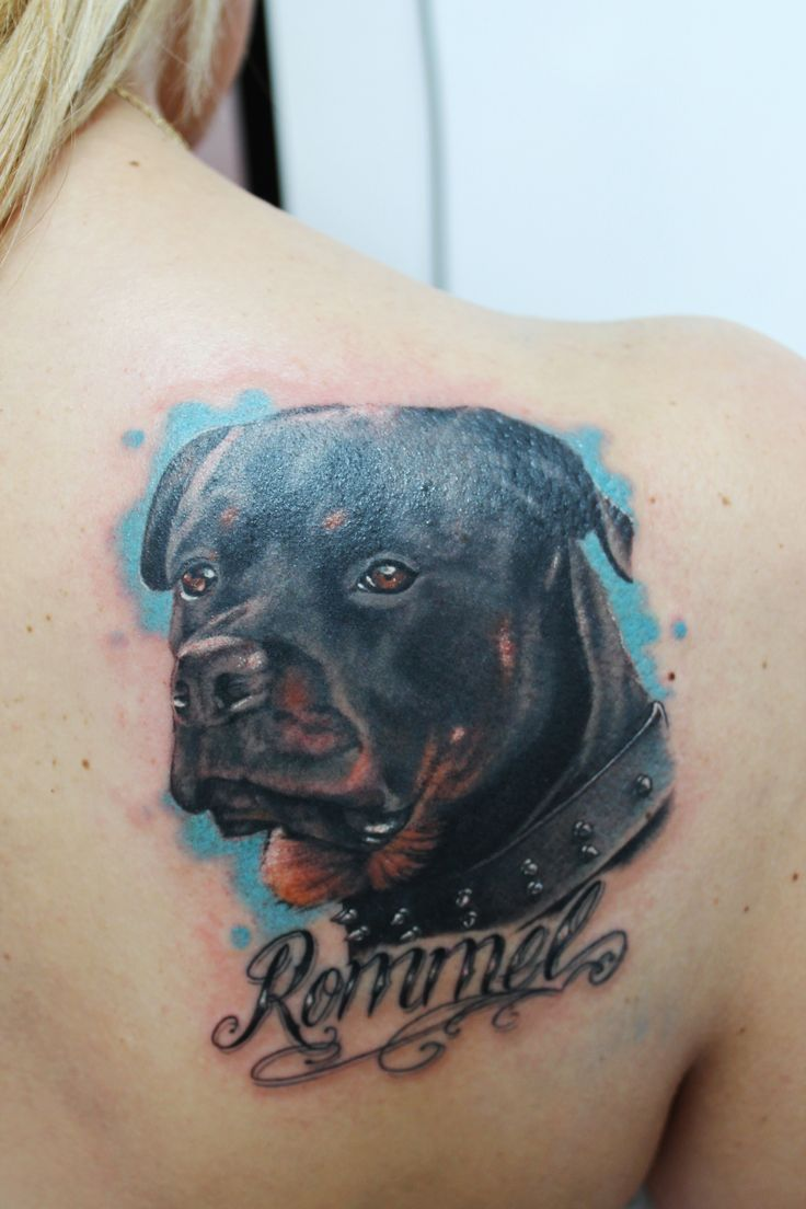 rottweiler-tattoo-design-back Coolest Home Designs on coolest apartments, coolest food, crazy home designs, epic home designs, holiday home designs, cat home designs, coolest design ever, good home designs, coolest architecture, family home designs, nicest home designs, best home designs, coolest bathroom, newest home designs, coolest mountain homes, coolest flowers, creative home designs, country home designs, love home designs, beautiful home designs,