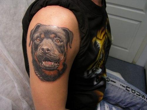 rottweiler tattoo shoulder