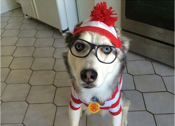 siberian husky halloween & 17 Costumes That Prove Huskies Always Win At Halloween
