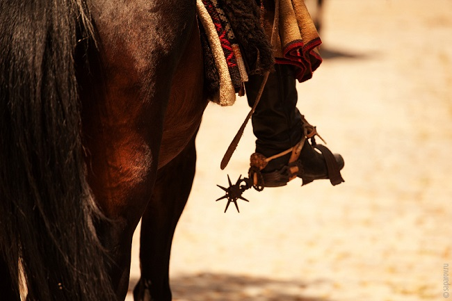 whips and spurs, horse