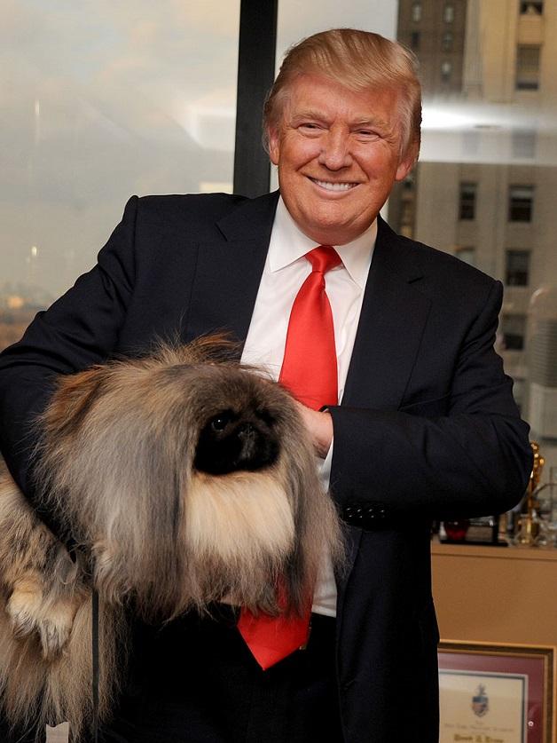 Donald Trump pekingese