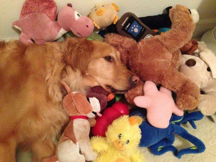 Golden Retriever toys