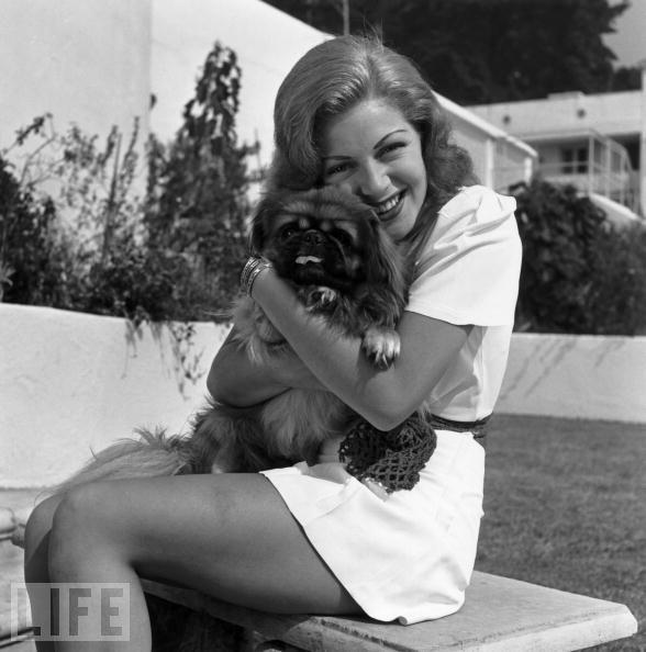 Lana Turner pekingese