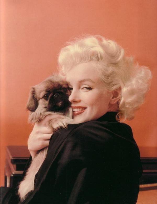Marilyn Monroe pekingese