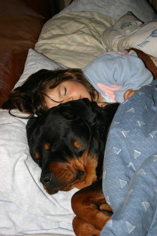 Rottweiler sleep
