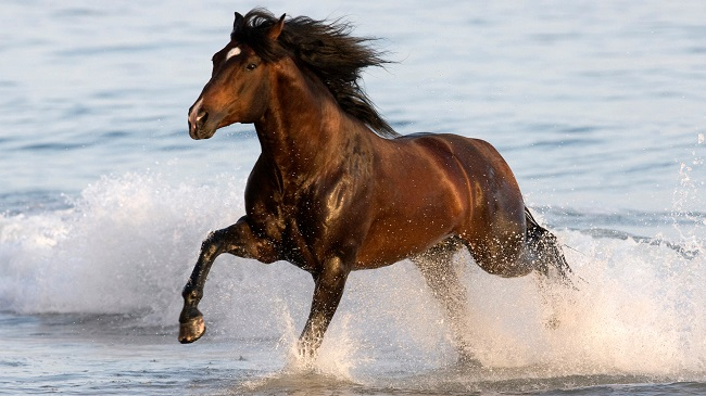 26 Best Horse Breeds Of The World 1