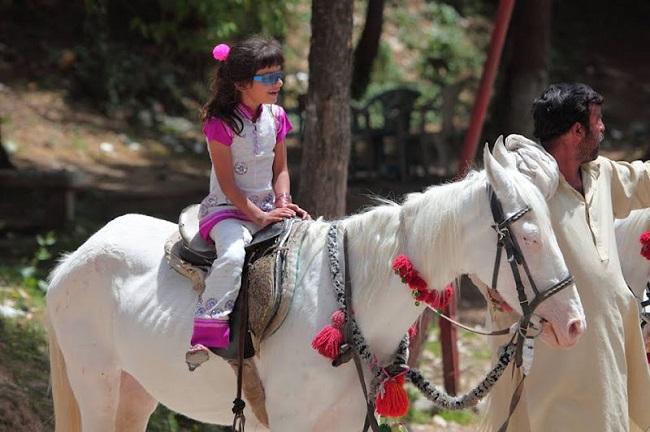 The Baluchi horse