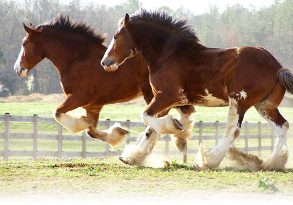 26 Best Horse Breeds Of The World 2