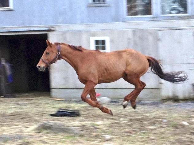 amazing flying horse