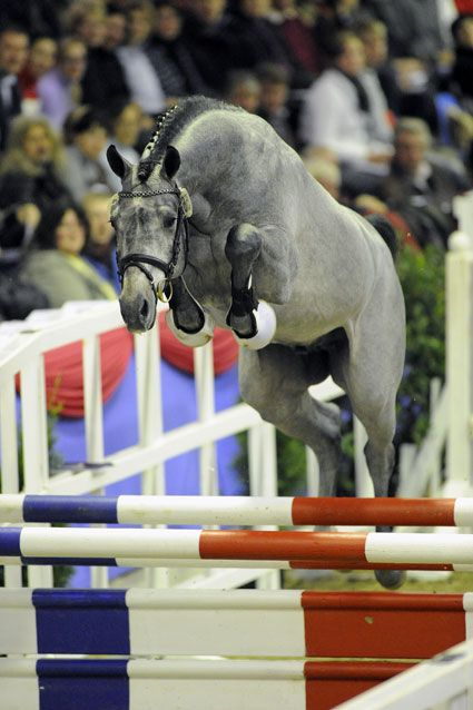 cool jumping horse pics