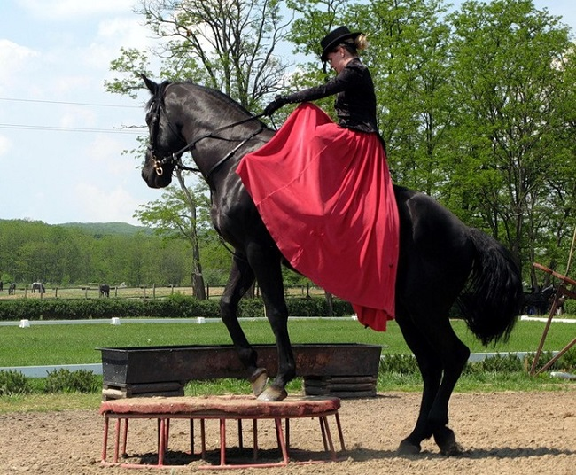 dancing horse red dress woman