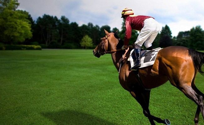 fast riding horse cool pics