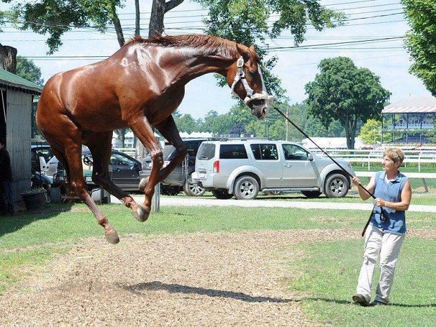 flying-horse jump pics