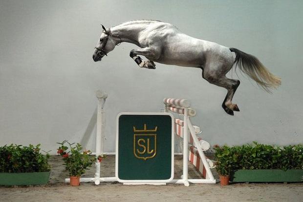 flying horse photo jump