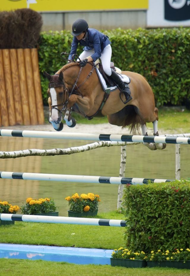 horse jumps over the fence